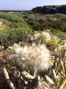 Natur pur Lanzarote