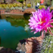 AugenBlick im Cactus Garten