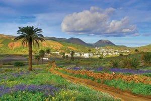 Frühling auf der Insel Lanzarote