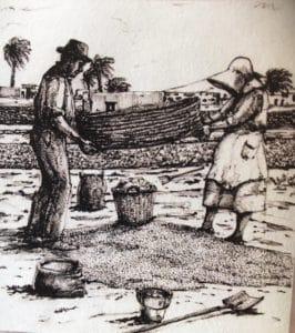 Getreidegewinnung zur Herstellung von Gofio