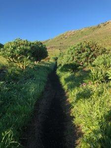 Pfad auf einer Wanderung in Haria Lanzarote