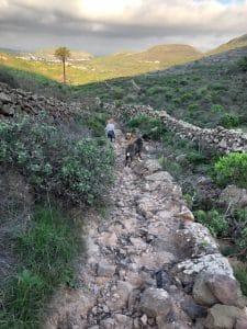 Wanderung im Flussbett Haria Lanzarote