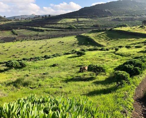 der gruene Norden Lanzarotes