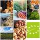 Nachhaltig-und-regional-Einkaufen
